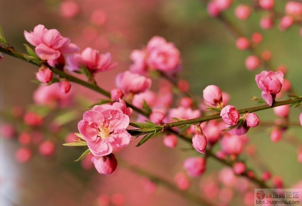 単朵的梅花,直接开在光秃秃的树枝上,有一种石头缝里冒