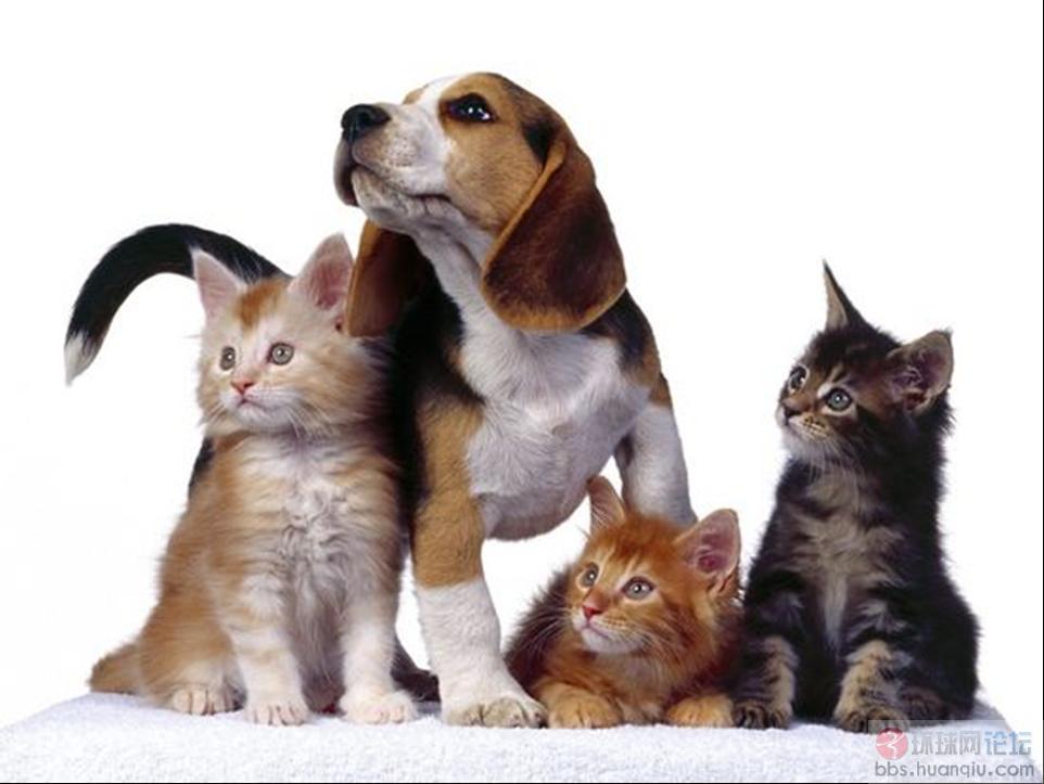 猫狗一家亲 jzk67890图片