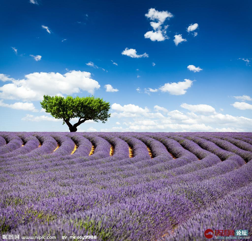 台湾薰衣草森林创办人之一詹慧君把薰衣草芳香带往天堂图片
