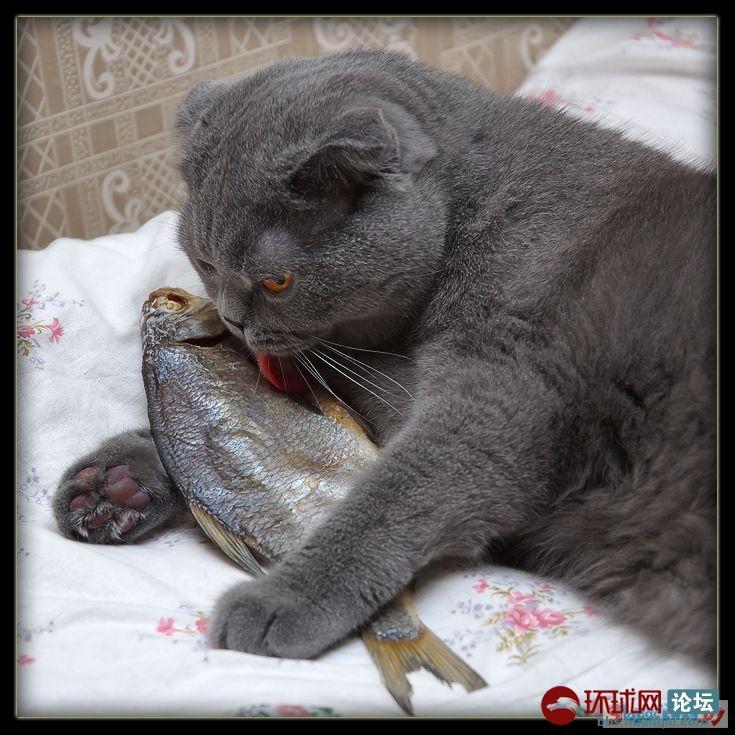 尹一鸿:会抓老鼠的猫也会吃鱼