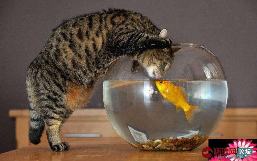 猪和鱼一起的图片大全
