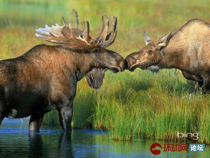 盘点自然界的各种动物生活特写
