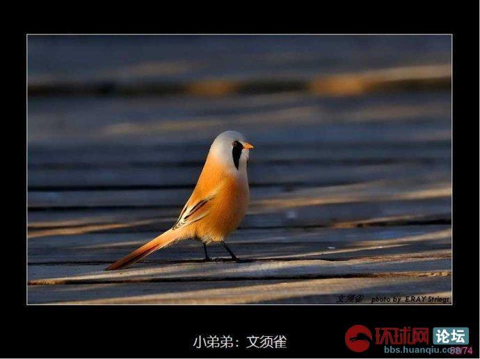 观赏美女 听各种鸟叫的声音