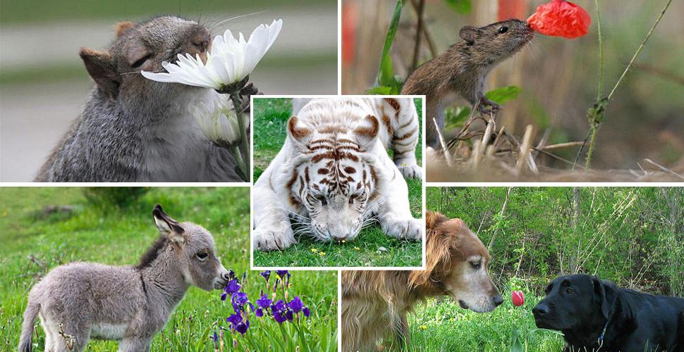 动物嗅花照片走红网络 温馨画面令人心旷神