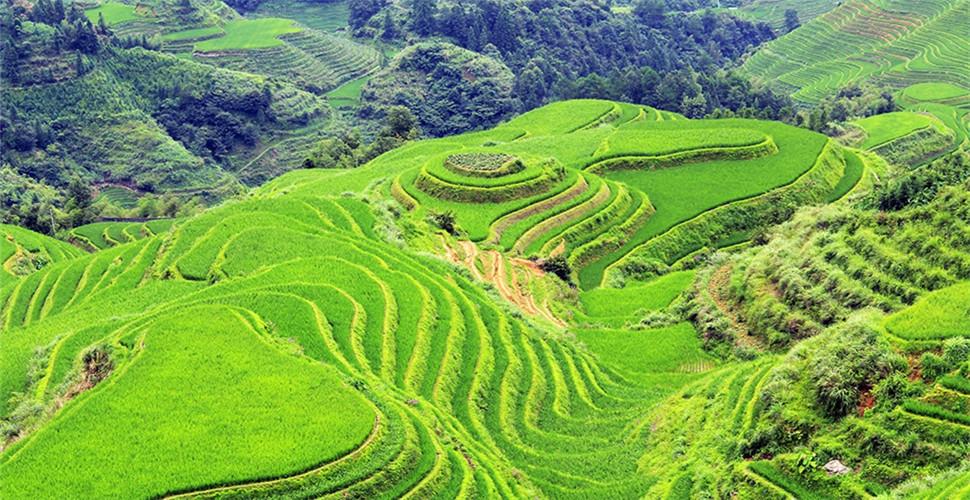 探寻广西龙脊梯田 人类战胜大自然的杰作