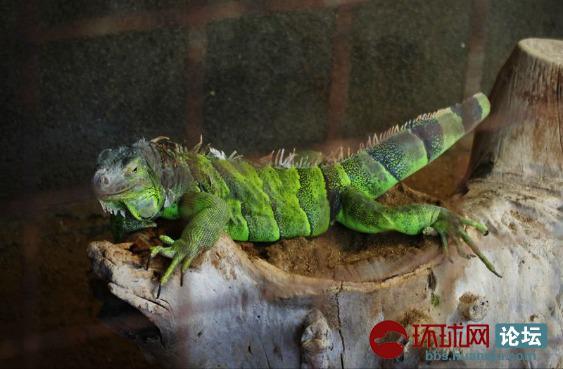 蜥蜴.png