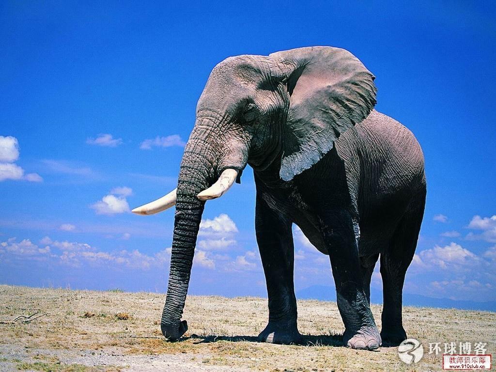 大象 动物 1024_768