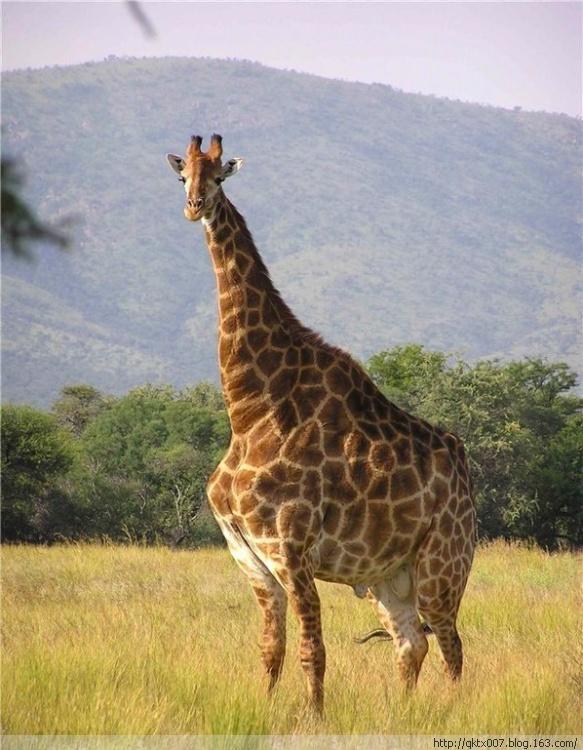 世界上最的动物_盘点地球上最丑陋的动物 丑到让人恐惧 图
