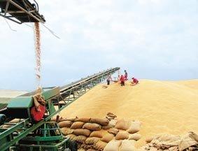 杨禹:秋粮产量和价格总体稳定局面无悬念