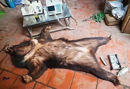 动物之殇:揭秘亚洲野生动物贸易链