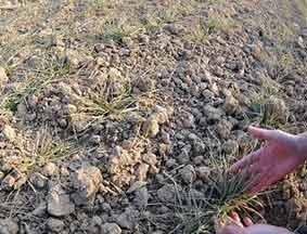 中国1.12亿亩农田受旱 272万人饮水困难