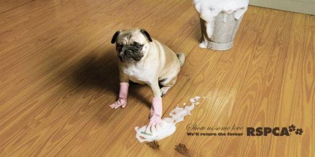 英国防止虐待动物协会