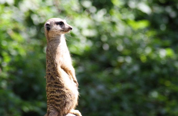 斑马长颈鹿动物园图片