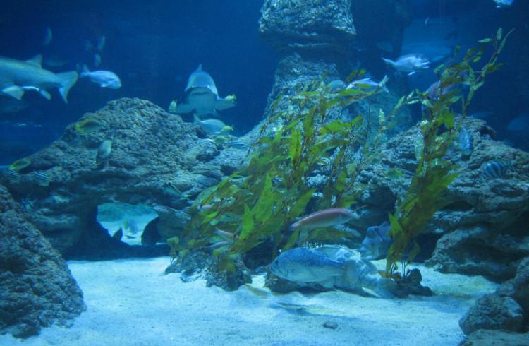 壁纸 海底 海底世界 海洋馆 水族馆 桌面 750_490