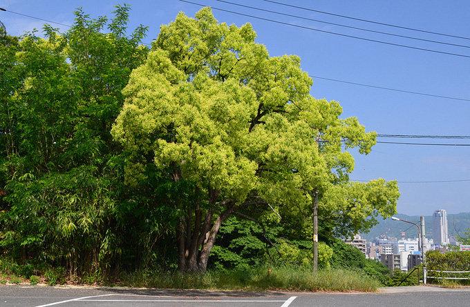 公园里树风景头像1