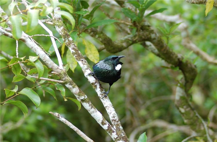 惠灵顿野生动物生态保护区