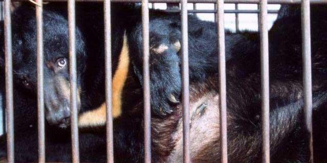 亚洲情色动物与人_亚洲动物基金_环球公益_环球网