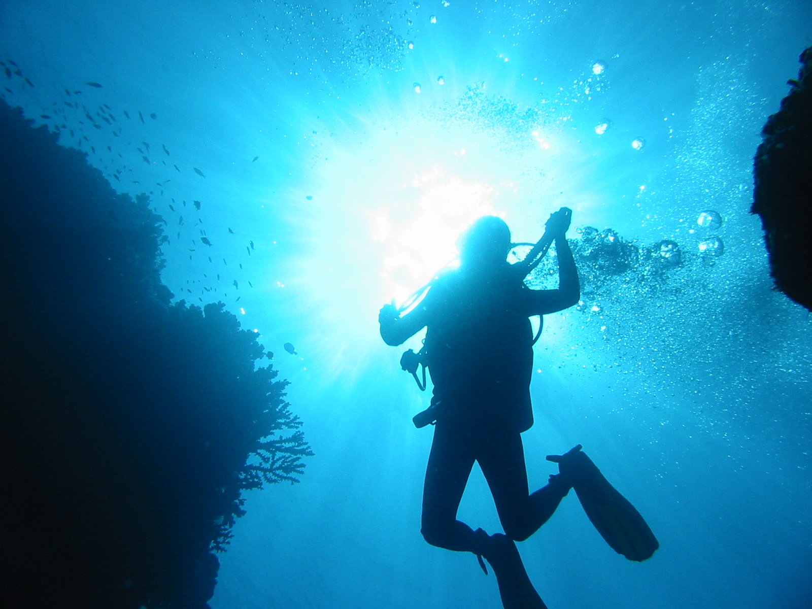 塔妙妮岛潜水