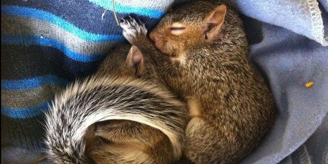 国际爱护动物基金会_环球网