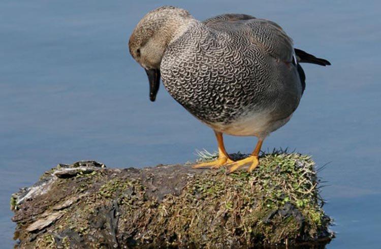 波特湿地鸟类保护区