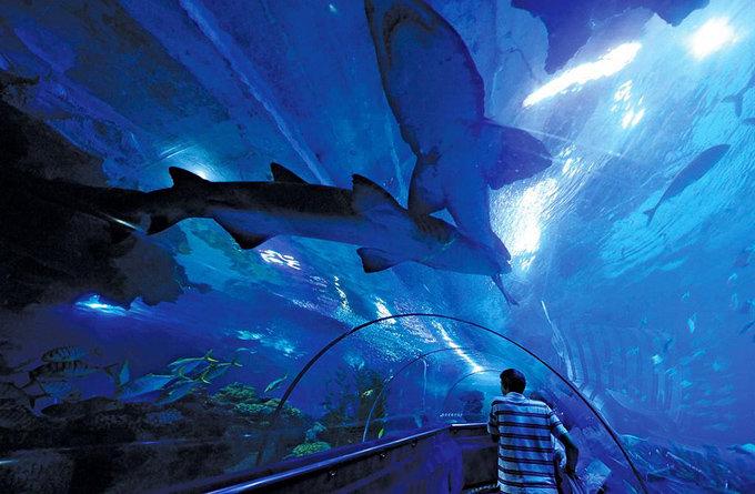 壁纸 海底 海底世界 海洋馆 水族馆 桌面 680_445