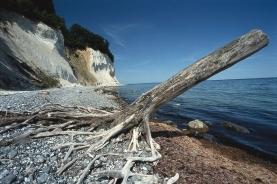 水边的朽木