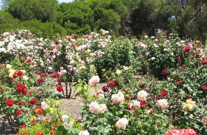 曼谷玫瑰花园_ 曼谷 _泰国