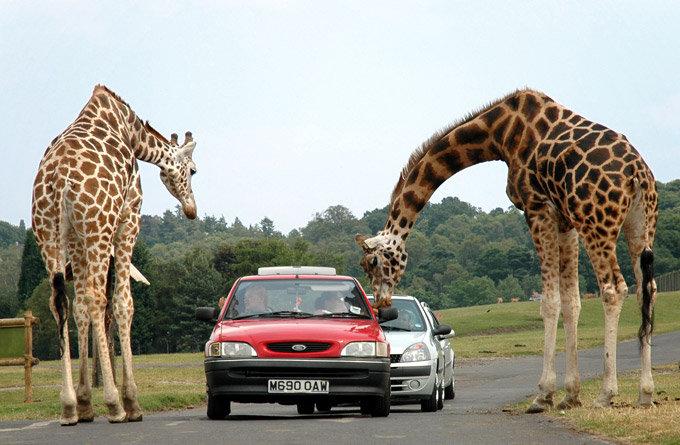 诺斯利野生动物园