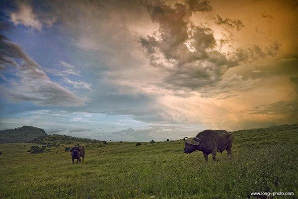 肯尼亚马拉河两岸动物迁徙12日摄影团
