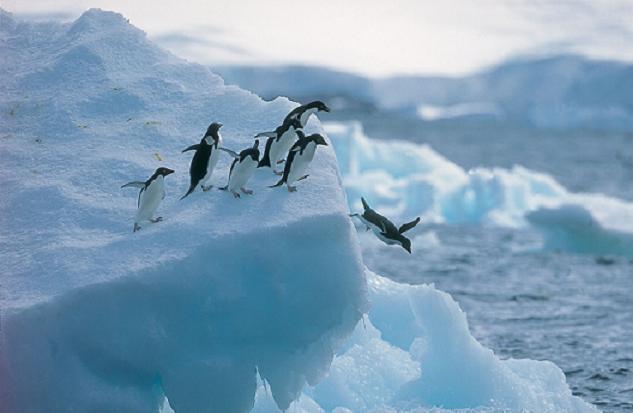 同时也有各种南极动物可