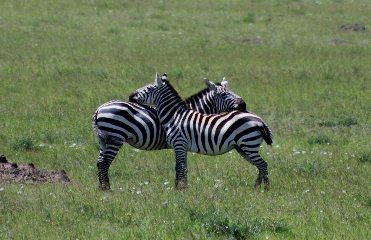 多彩的动物世界
